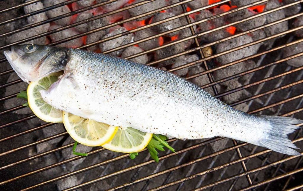 fish-optimzed